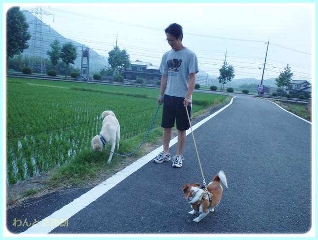 f:id:yasukazu01:20140629204731j:image