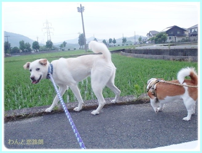 f:id:yasukazu01:20140629205932j:image