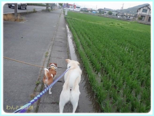 f:id:yasukazu01:20140629205934j:image