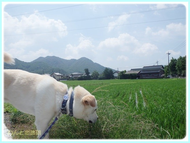 f:id:yasukazu01:20140630221423j:image