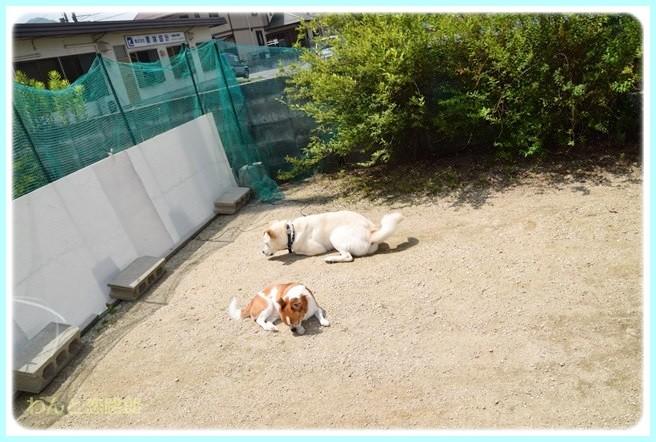 f:id:yasukazu01:20140703224934j:image
