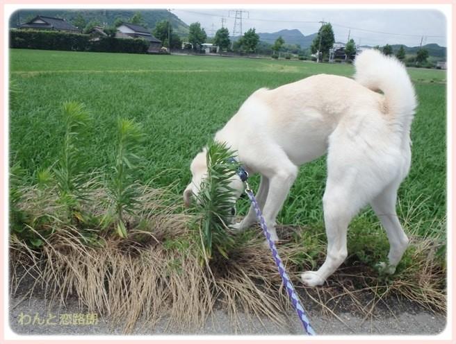 f:id:yasukazu01:20140708205910j:image