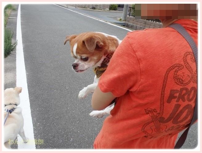 f:id:yasukazu01:20140708211051j:image