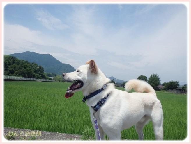 f:id:yasukazu01:20140712201047j:image