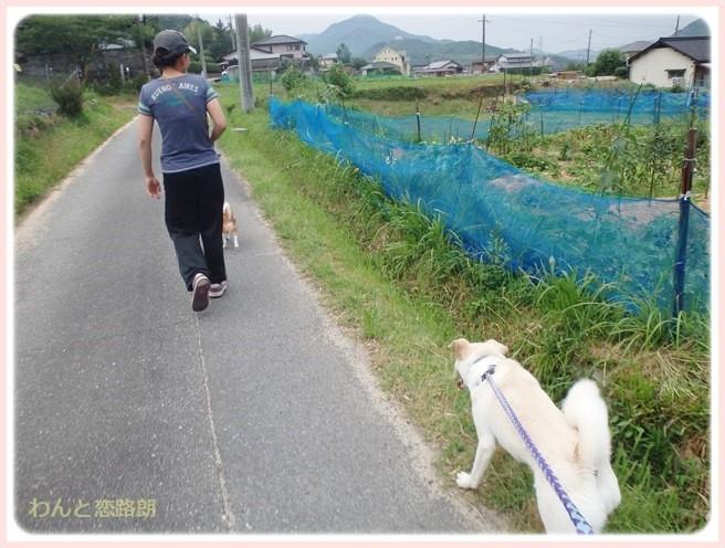 f:id:yasukazu01:20140712201438j:image