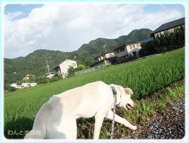 f:id:yasukazu01:20140721221713j:image