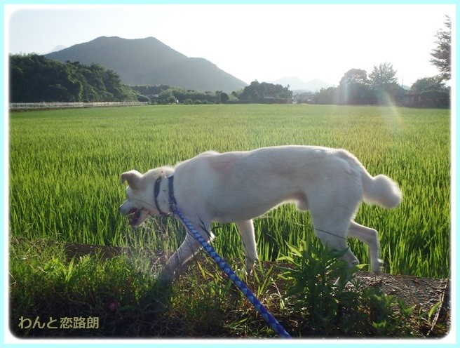 f:id:yasukazu01:20140721221854j:image