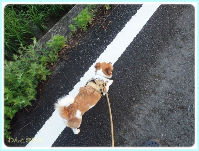 f:id:yasukazu01:20140721221950j:image