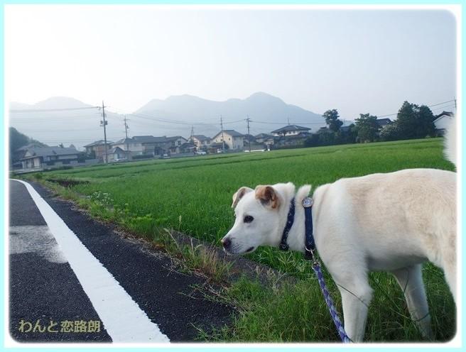 f:id:yasukazu01:20140722211713j:image