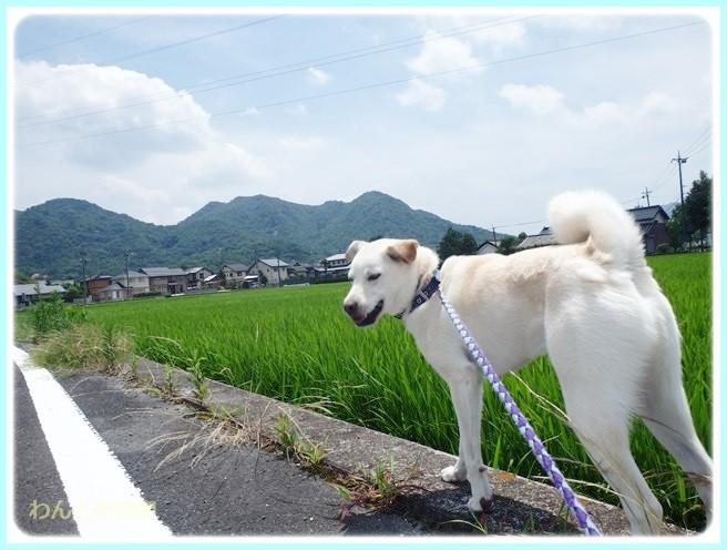 f:id:yasukazu01:20140723221750j:image