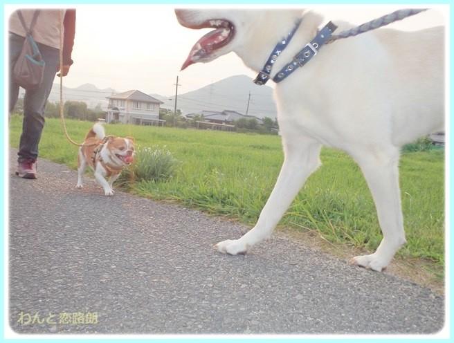 f:id:yasukazu01:20140724213451j:image