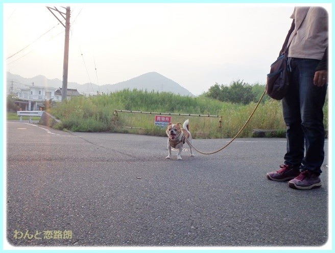 f:id:yasukazu01:20140724213831j:image
