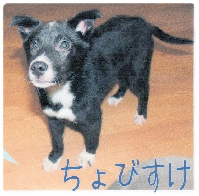 f:id:yasukazu01:20140727125219j:image