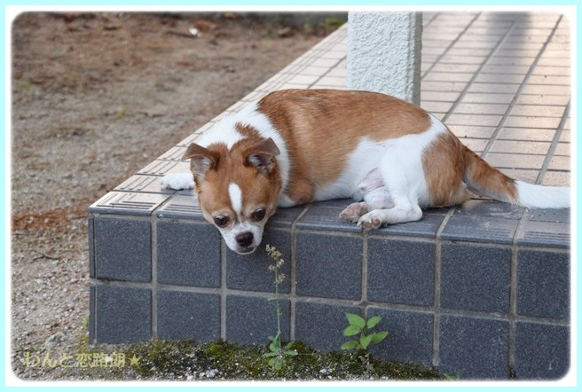 f:id:yasukazu01:20140727204805j:image