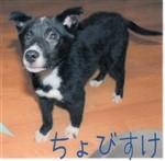f:id:yasukazu01:20140728223759j:image