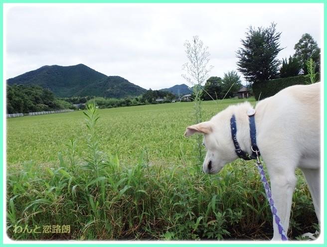 f:id:yasukazu01:20140816220009j:image