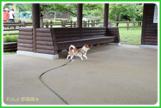 f:id:yasukazu01:20140817205030j:image