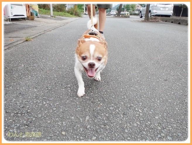 f:id:yasukazu01:20140825204906j:image