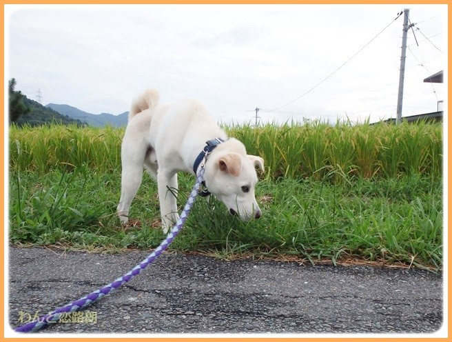 f:id:yasukazu01:20140825205131j:image