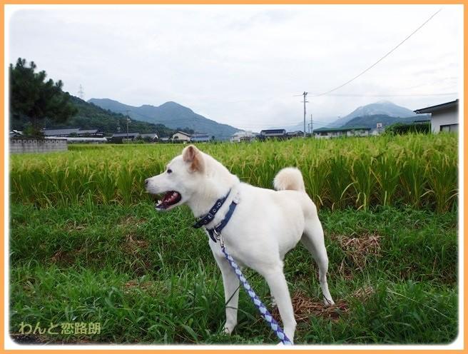 f:id:yasukazu01:20140825205236j:image