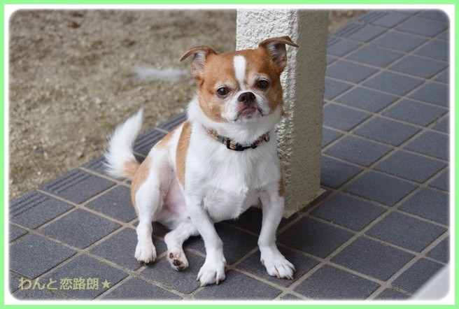f:id:yasukazu01:20140827195801j:image