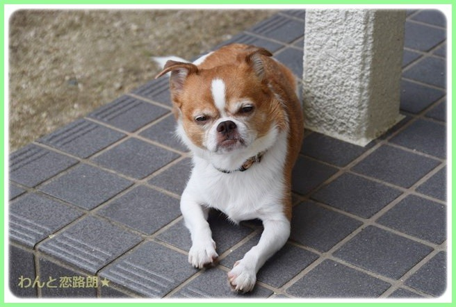 f:id:yasukazu01:20140827195919j:image