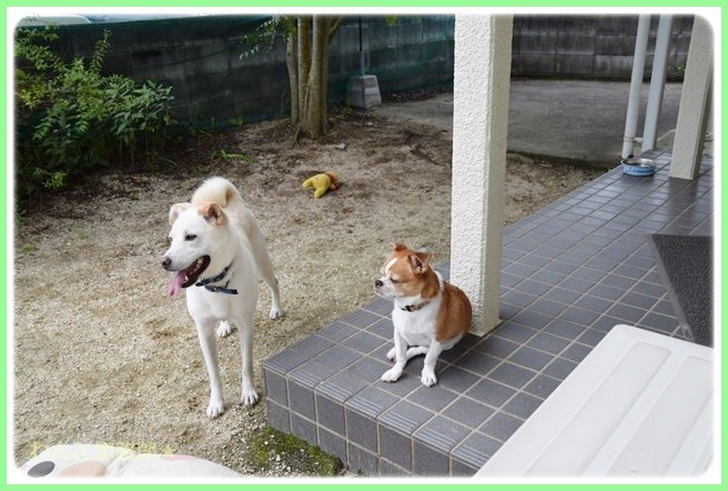 f:id:yasukazu01:20140827200243j:image