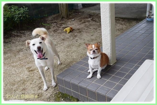 f:id:yasukazu01:20140827200337j:image