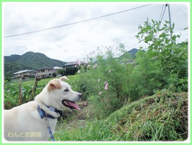 f:id:yasukazu01:20140827201247j:image