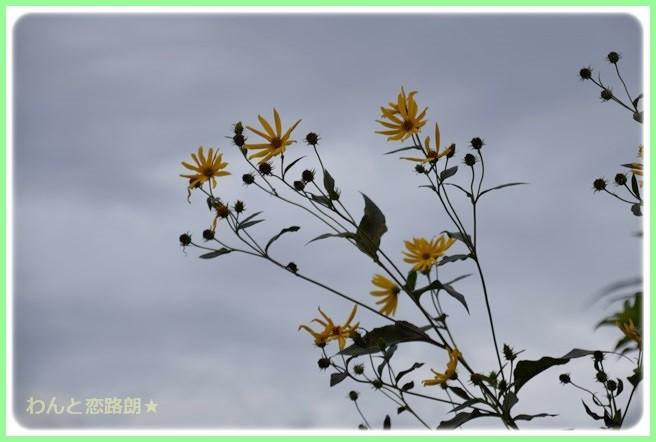f:id:yasukazu01:20140828223635j:image