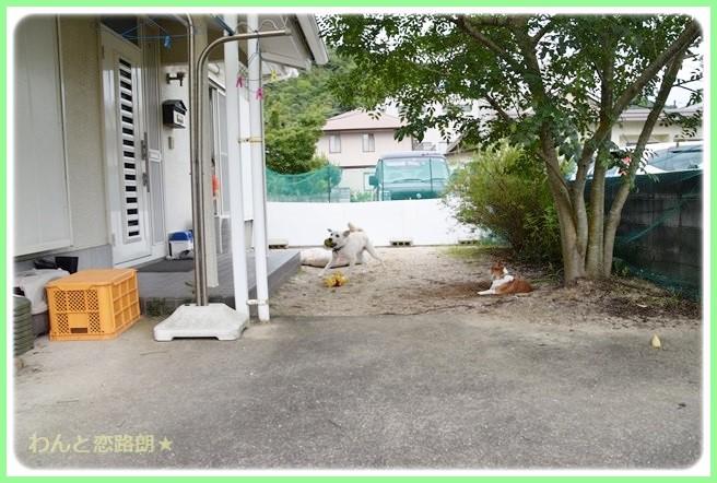 f:id:yasukazu01:20140829095331j:image
