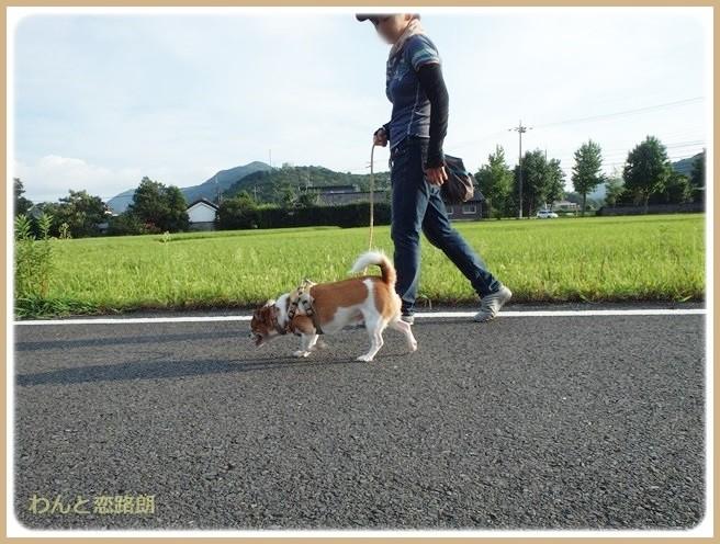 f:id:yasukazu01:20140830202330j:image