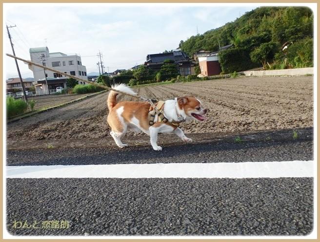 f:id:yasukazu01:20140830202544j:image