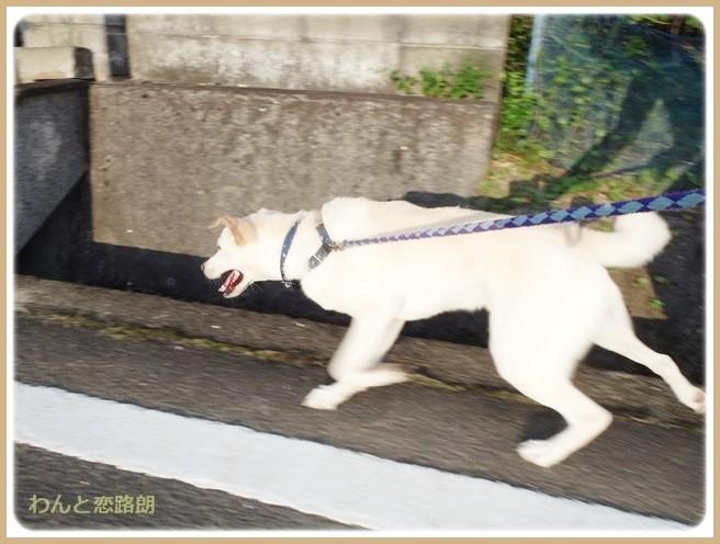 f:id:yasukazu01:20140830202754j:image