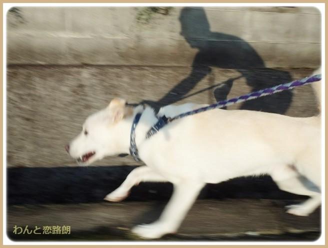 f:id:yasukazu01:20140830202835j:image