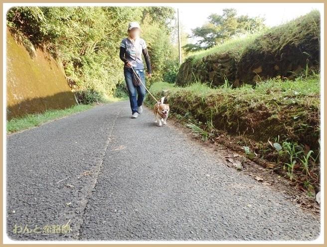 f:id:yasukazu01:20140830204034j:image