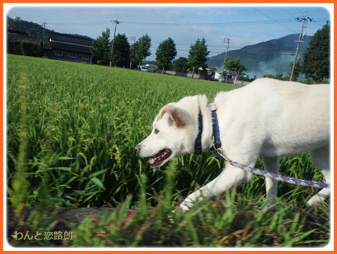 f:id:yasukazu01:20140831200908j:image