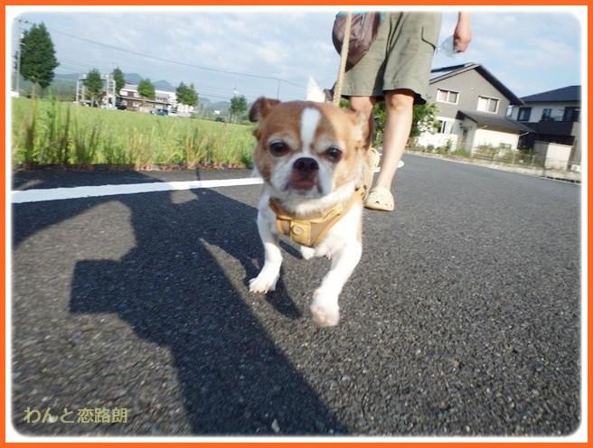 f:id:yasukazu01:20140831201408j:image