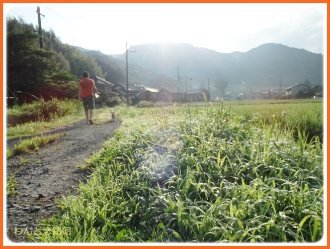 f:id:yasukazu01:20140831202035j:image