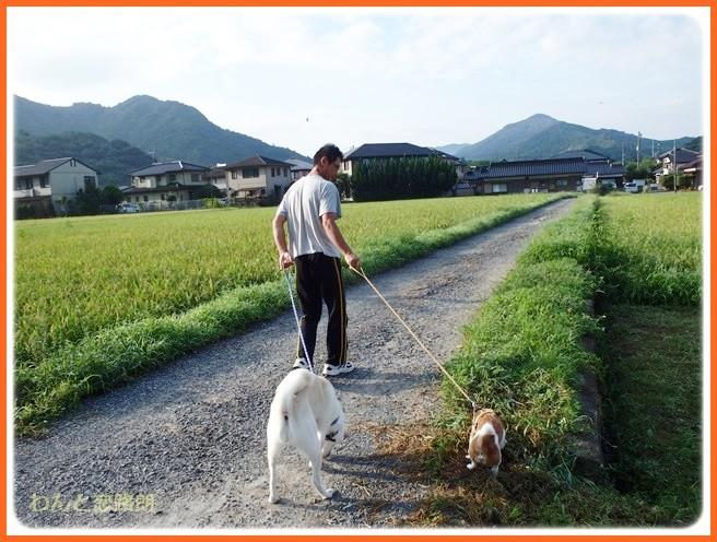 f:id:yasukazu01:20140831202332j:image