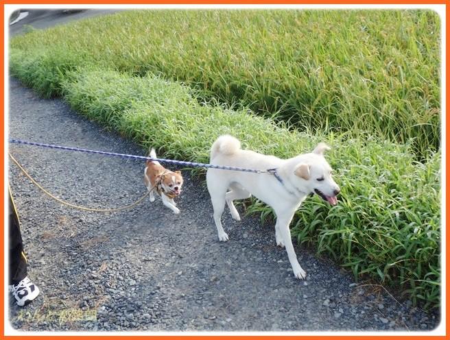 f:id:yasukazu01:20140831202505j:image