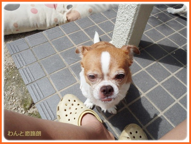 f:id:yasukazu01:20140831205601j:image