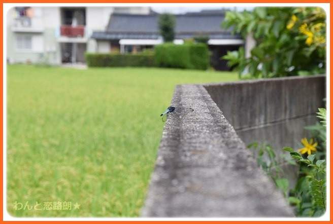 f:id:yasukazu01:20140901212028j:image