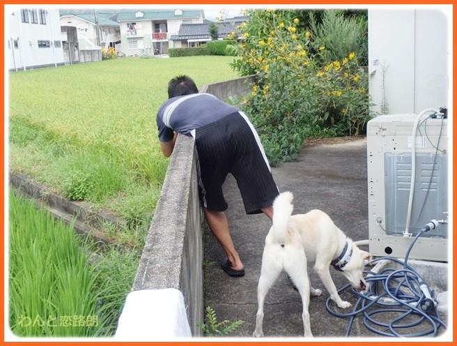 f:id:yasukazu01:20140901212150j:image