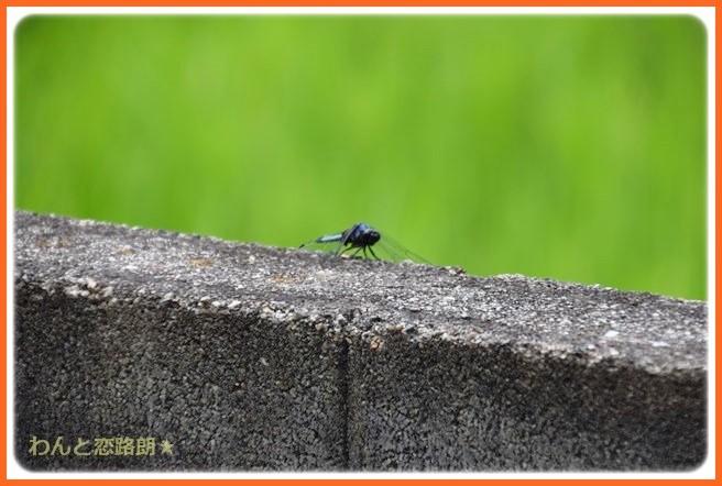 f:id:yasukazu01:20140901212902j:image