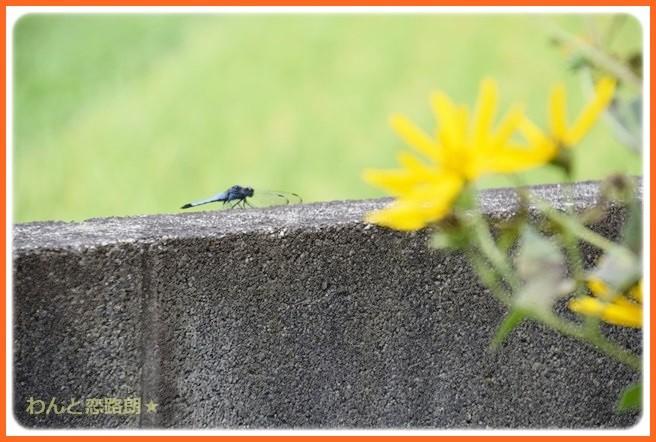f:id:yasukazu01:20140901213141j:image