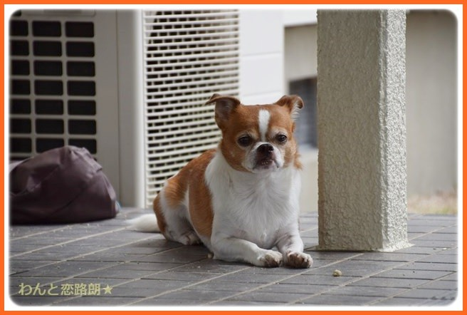 f:id:yasukazu01:20140901220931j:image