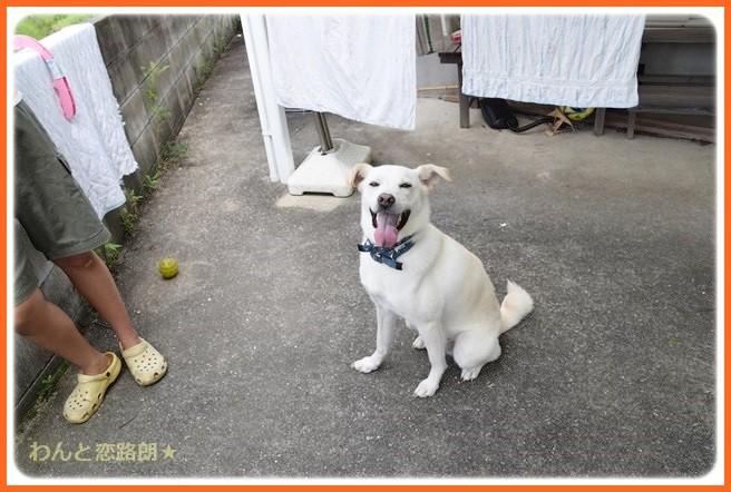 f:id:yasukazu01:20140903202828j:image