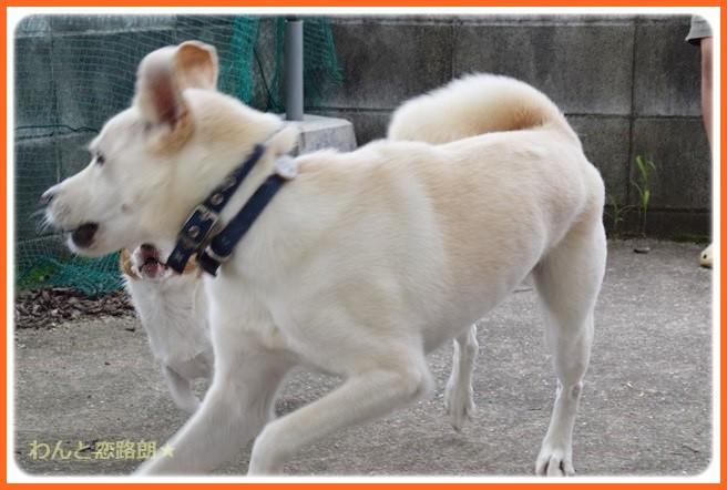 f:id:yasukazu01:20140904202150j:image