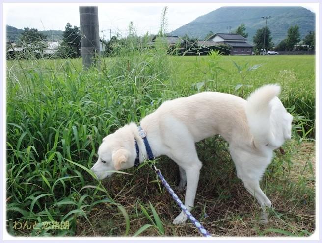 f:id:yasukazu01:20140905205004j:image